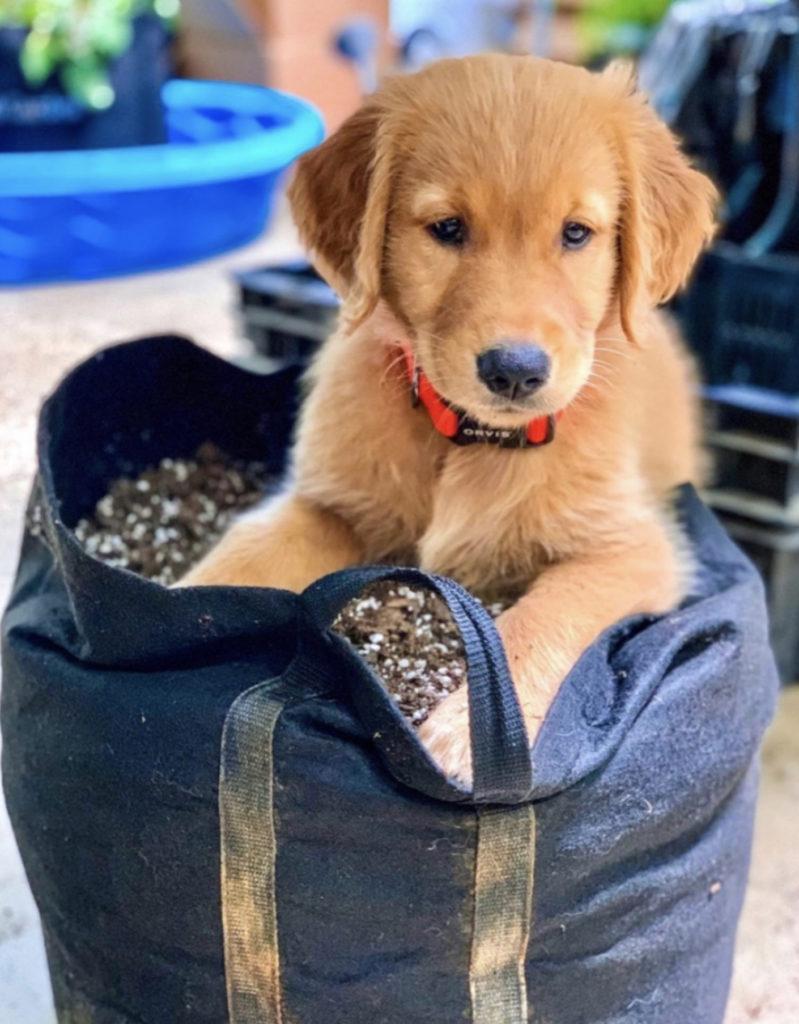 Puppy on top Gardenuity Garden Kit