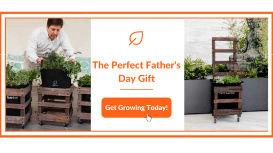 Father's Day Ideas Banner