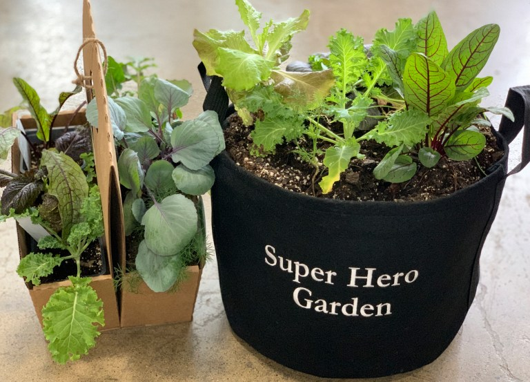 Superhero Garden Kit