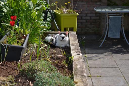 Cat in Herb Garden