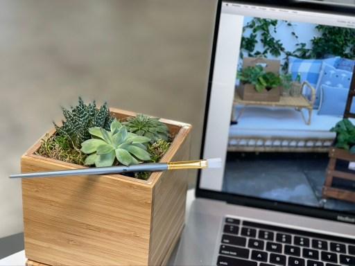 Gardenuity Desktop Succulent Garden