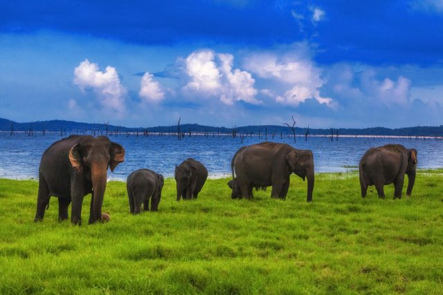 Elephants in Yala National Park