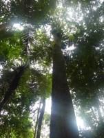 PNN Amacayacu