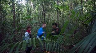 Wild Gibbon Trek - Gibon zlatolíci