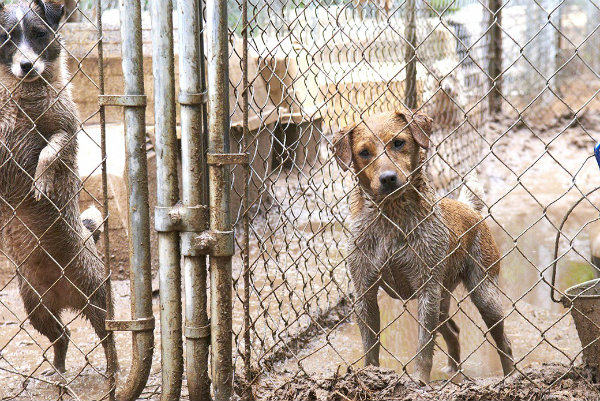 Nevada county trying to crack down on puppy mills