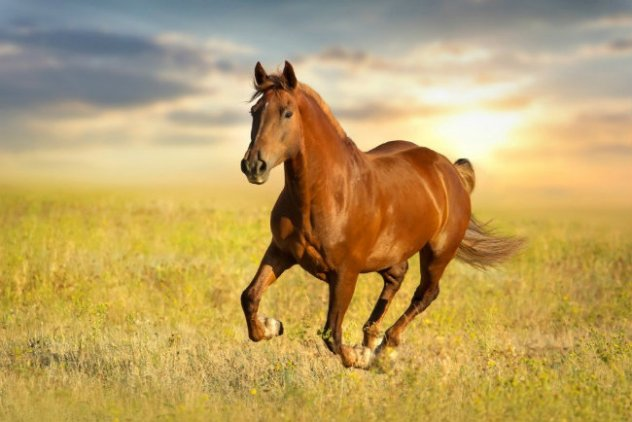 Craigslist scam may have led horses to slaughter