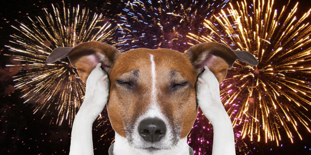 Keep your pets safe this 4th of July