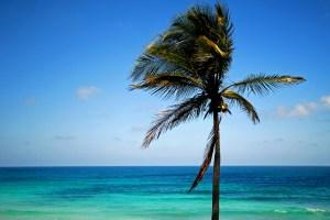 Tropical beach, blue sky & sea, with palm tree