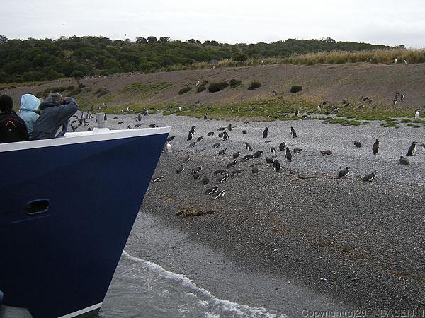 110106フエゴ島・ビーグル水道のペンギンの島、ゲーブル島
