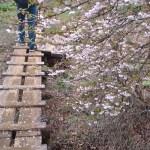 桜の檜洞丸