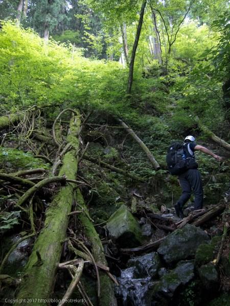 170827奥の二俣の先の植林帯を登る