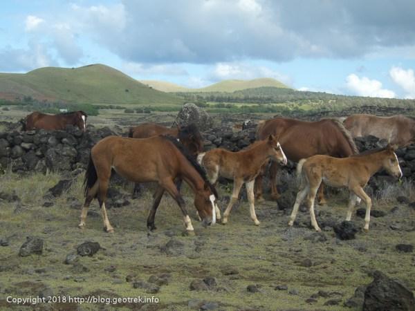 181114 放牧された馬