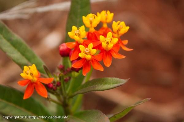 171114 アナケナビーチの花
