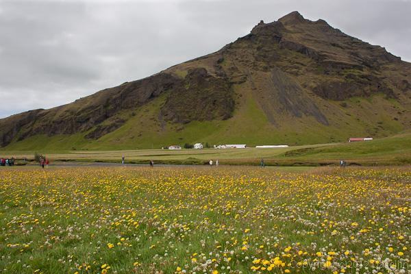 120806アイスランド、グリーンランドの旅・Skogarfossは花がいっぱい