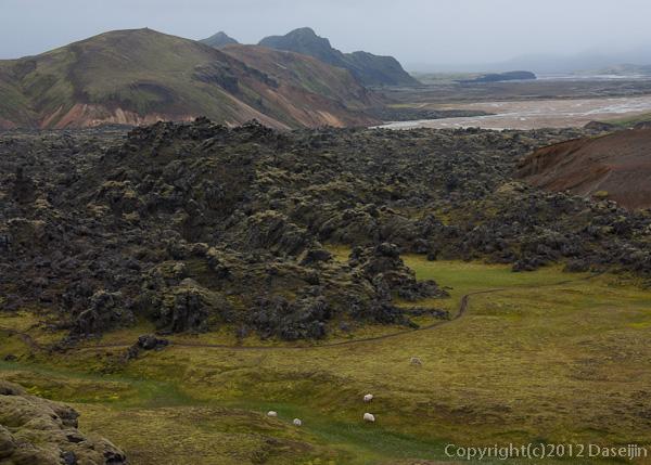 120809アイスランド、グリーンランドの旅・溶岩の台地、ここにも羊が