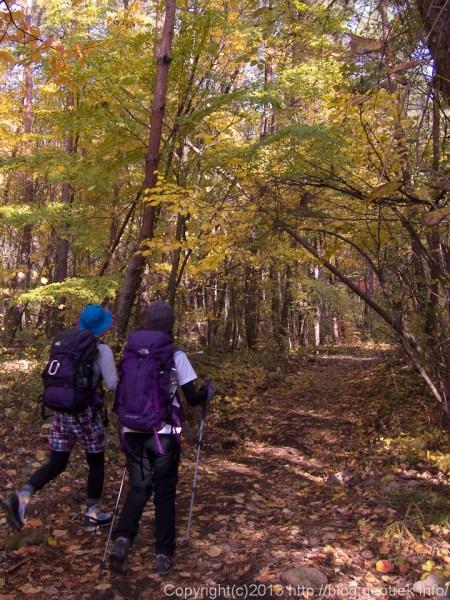 131109茅ヶ岳登りはじめの紅葉