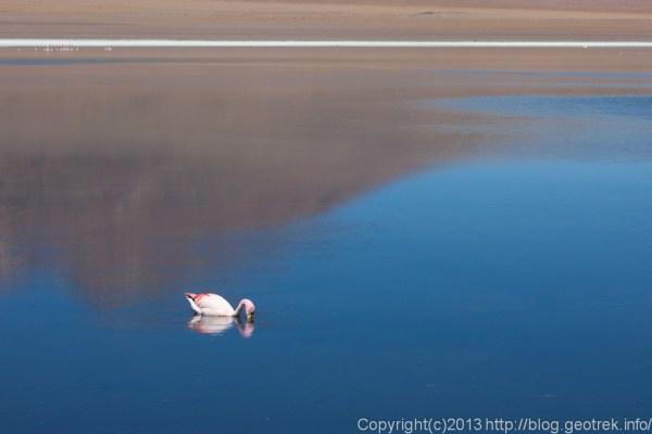 130904アタカマ砂漠、湖水に浮かぶフラミンゴ