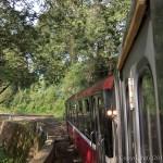深き森の阿里山~台湾の旅(4)