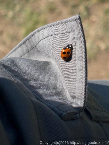 ポケットのテントウ虫
