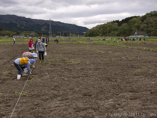 1205121ボランティア・広い土地にみんなで向日葵の種をまく