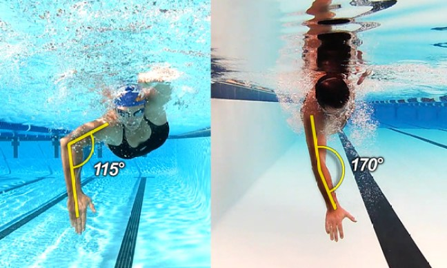 Best Swimming Classes In Gurgaon Fitso Seals Fitso