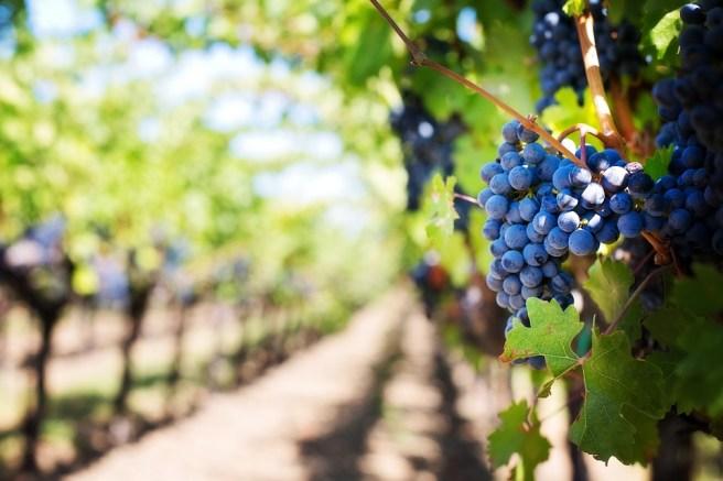 wine tours in california