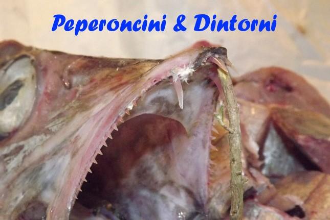 Pesce sciabola (Lepidopus caudatus)