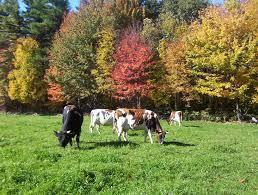 La biodinamica per un nuovo modello agricolo
