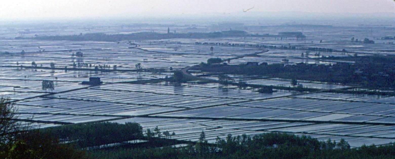 coltivatori di riso in rivolta