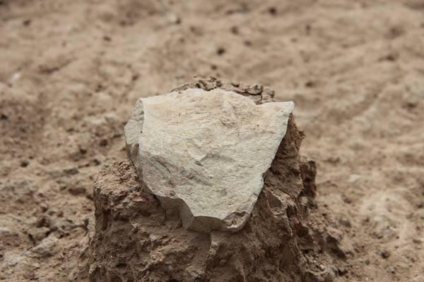 Scoperti utensili da cucina di 3,3 milioni di anni fa