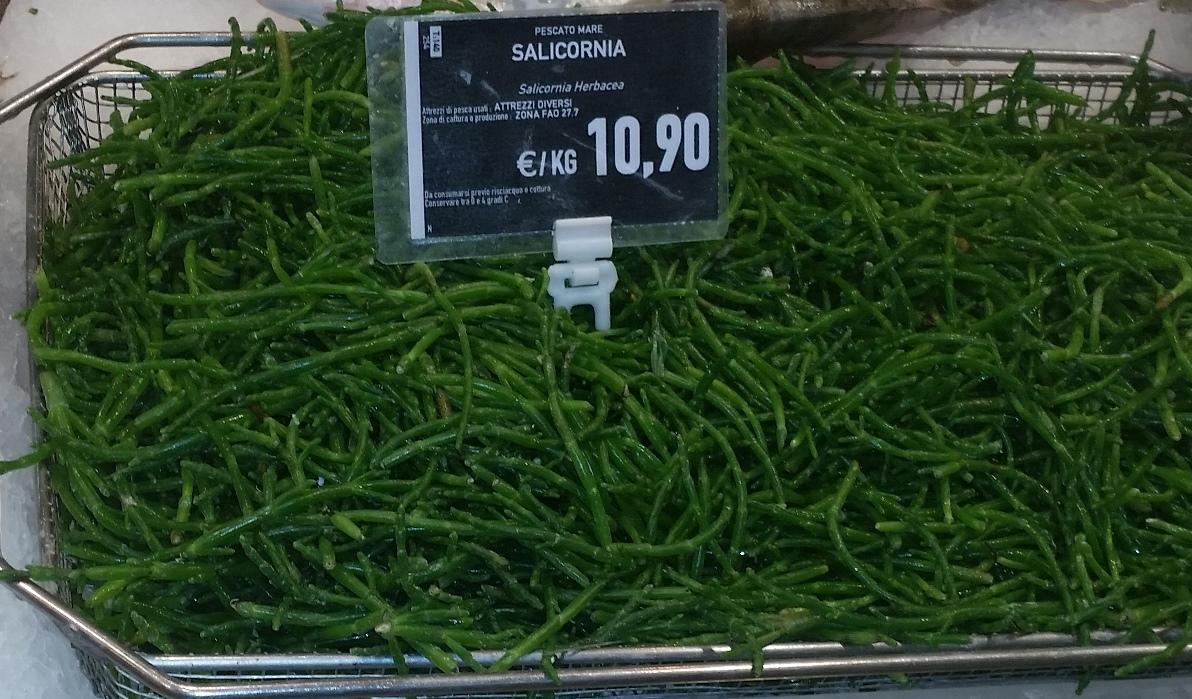 Salicornia herbacea