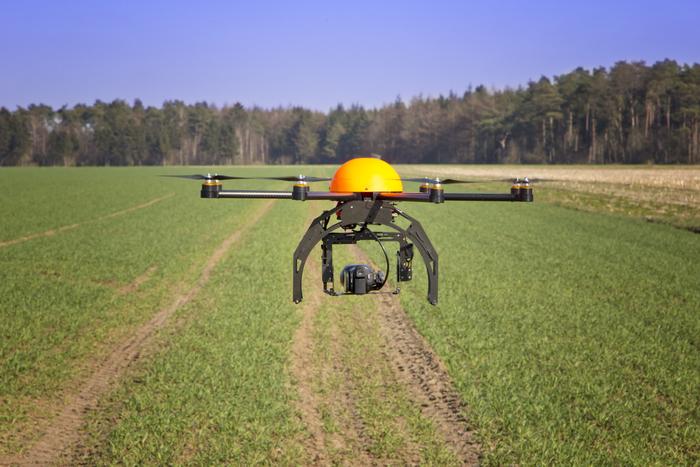 Droni in campo contro xylella e punteruolo rosso