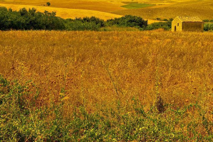 Accordo triennale fra Barilla e coltivatori grano