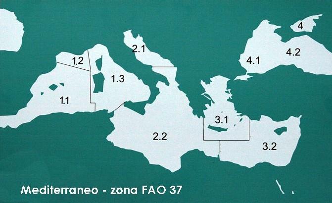 Zone Fao