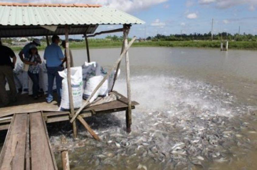 Pesci allevati, all'estero, con antibiotici e ormoni