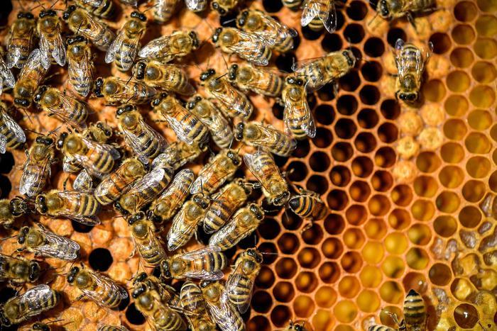 Fondi Mipaaf da 2 milioni per rilancio apicoltura