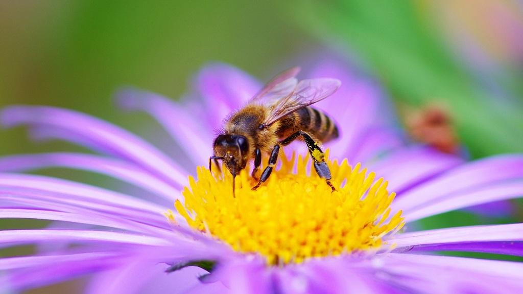 Se gli insetti scomparissero, l'ambiente crollerebbe nel caos
