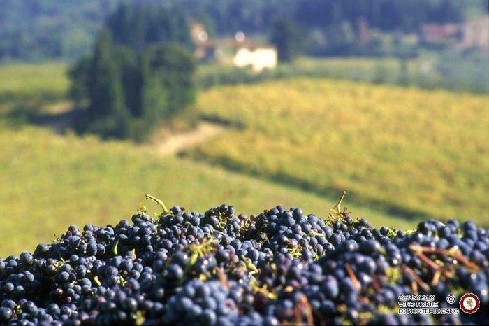 Vinitaly-Nomisma, +5,1% export Italia nonostante Covid