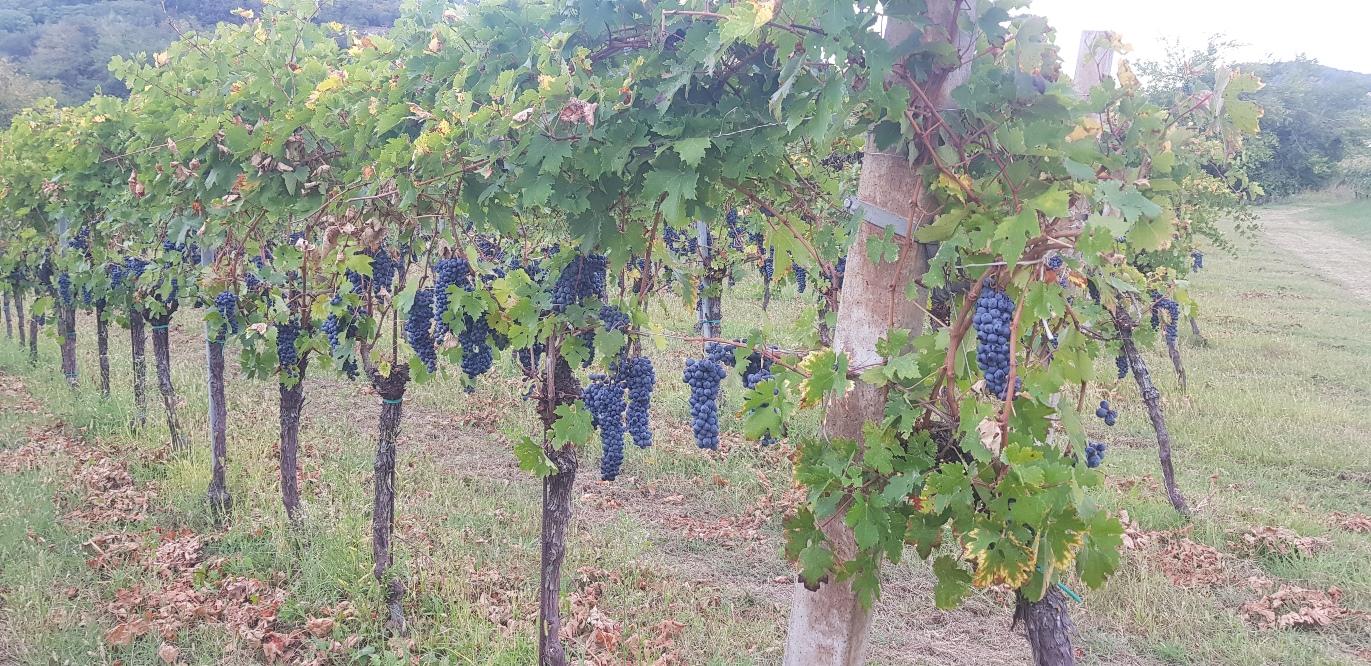 Tour fra i vini e i prodotti dei Colli Euganei Prima Parte
