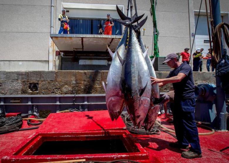 Pesca, Pe verso scontro con gli Stati su quote tonno rosso