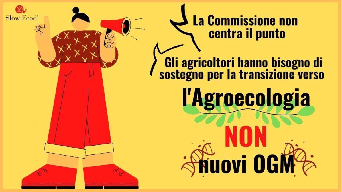 Fuori gli Ogm dai nostri campi e dalle nostre tavole!