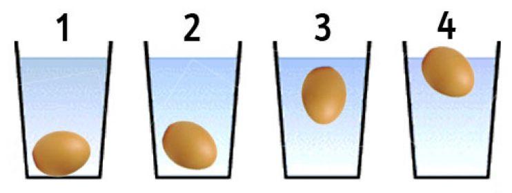 Risultati immagini per riconoscere le uova fresche