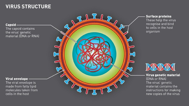 Why Haven't We Cured Viruses Yet? - GiddyUp