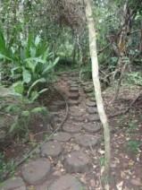 der Weg zum nächsten Wasserfall