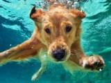 Segurança para pet na piscina