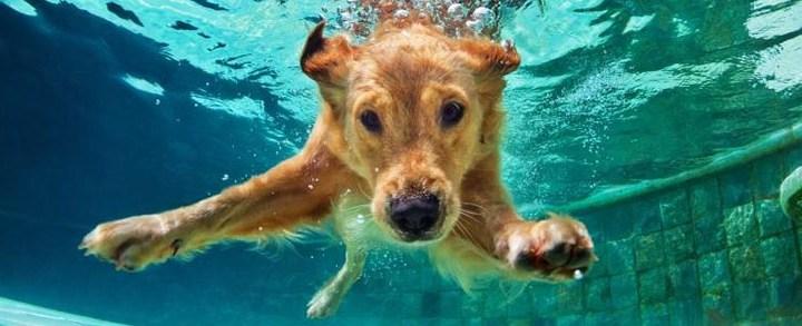 Segurança para seu PET na piscina!
