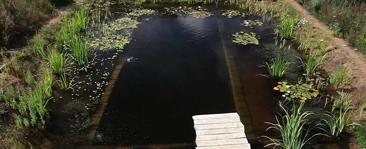 O que é uma piscina biológica e como são feitas?