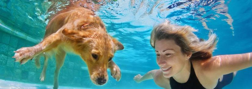 5 dicas de segurança para cães na piscina