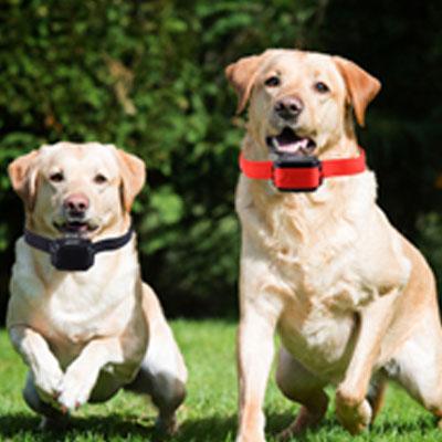 cães na piscina 2