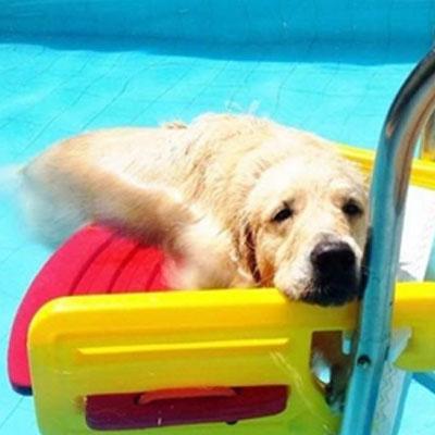 cães na piscina 6